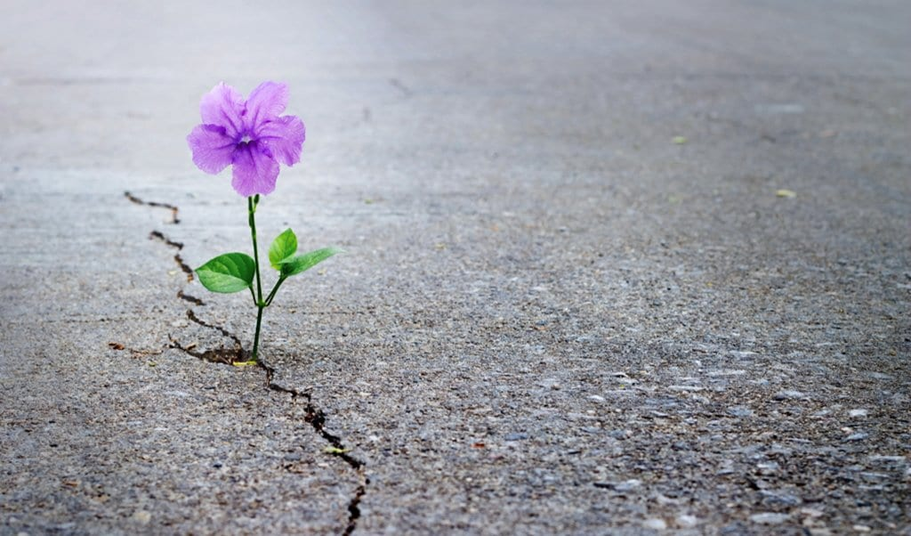 Image of a plant growing through a crack in the pavement
